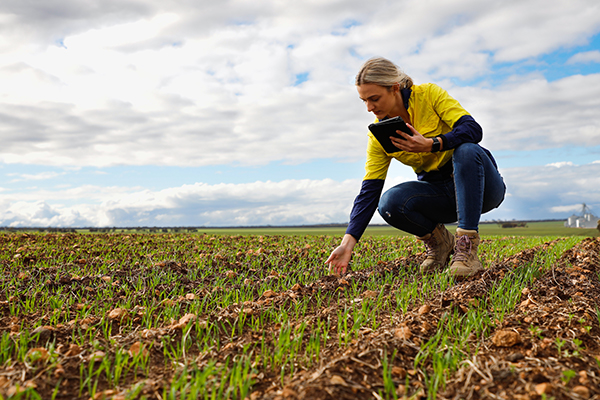 Managing the Business Checking Crop Growth